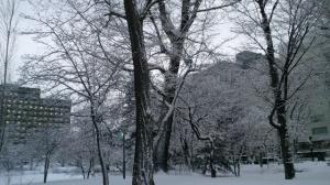 札幌冬景色